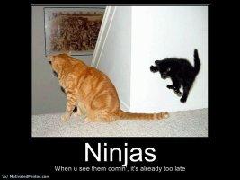 ninjakitty.jpg