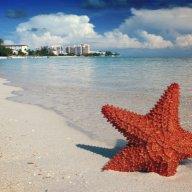 TropicalStarfish