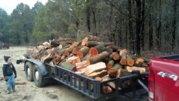 gabe firewood.jpg