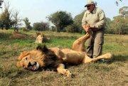 lion-foot-massage-51093.jpg