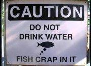 FishFlavor.jpg