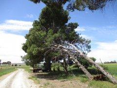 tangledtrees.jpg