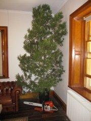Christmastreesaw1.jpg