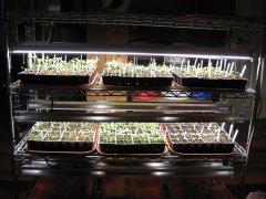 Seedlings 2-15-2021 002.JPG