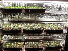 Seedlings 2-17-2021 001.JPG