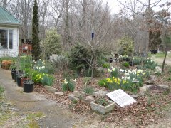 Flower garden 3-6-2021 001.JPG