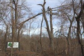 Arboretum6.jpg