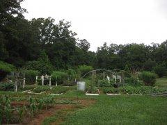 Garden view 7-1-2013 (4).JPG