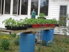 Tomato seedlings 3-21-2021 003.JPG