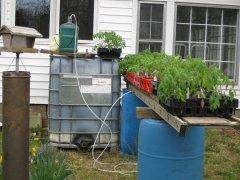 Tomato seedlings 3-21-2021 004.JPG