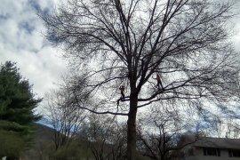 Oak Prune1.jpg