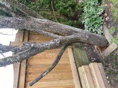 Tree 1b.jpg