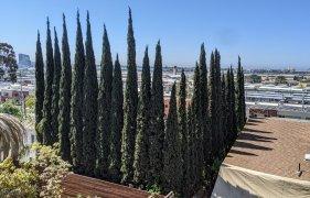 deck view_20210419b.jpg