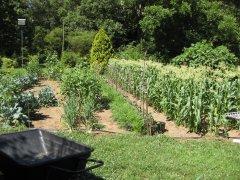 Garden 9-17-2021 003.JPG