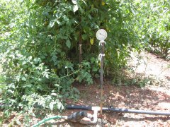 Garden and irragation photos 6-27-2021 002.JPG