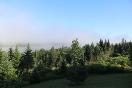 20210729-075400-morning-fog.jpg