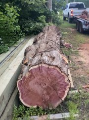 Smaller Section of Cedar.jpg