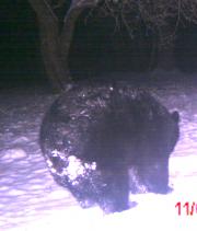 1 bear 10.png