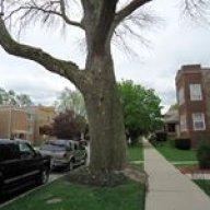 Scottie Ash tree seed