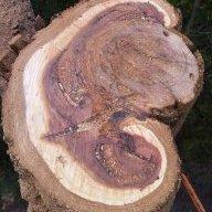 treesmith