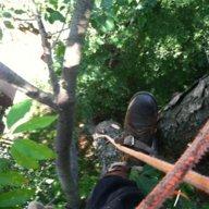 treebilly