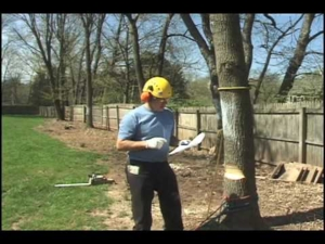 Tree Falling: Directional Steering with the Back Cut
