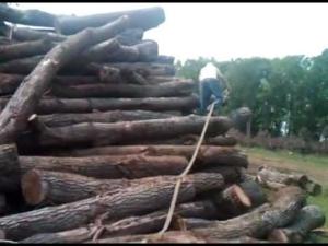 Lumberjackin Jersey Style !