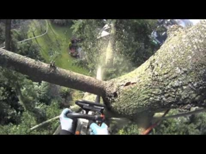 Fir tree removal using speed line | Arborist Dan Holliday (climbingarborist.com)