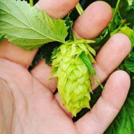 The hop cartel