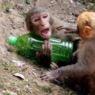 DrunkenMonkey37