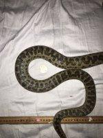 snake . .JPG