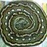 AM Pythons