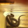 ReptilesAsPets