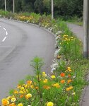 pollinators2.jpg