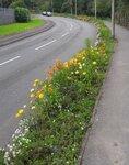 pollinators5.jpg