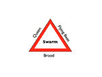 swarm triangle..jpg