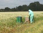 Buckwheat.jpeg