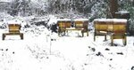 snow hives1.jpg