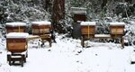 snow hives3.jpg