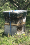 First swarm 9 May 2021.png