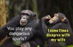 Chimp consling easch other.jpg