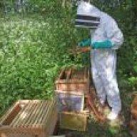 thurrock bees