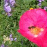 Swinton apiaries