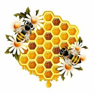 The bees knees honey
