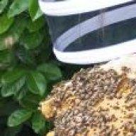 freethorpe bees