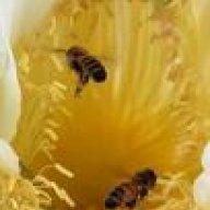 bee-live