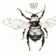 bellabee