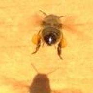 Jan's Buzz