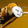 Norf Bee