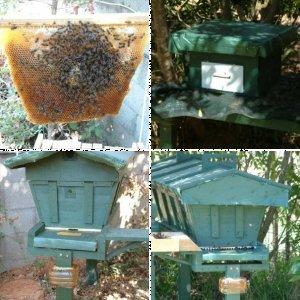 Hive 1